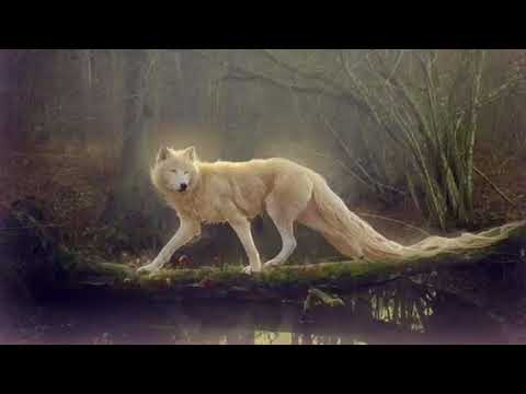 ~Wolfblood Subliminal~