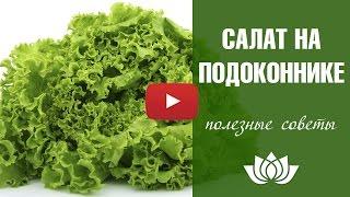 Салат 🍀 Выращивание на подоконнике зимой 🍀