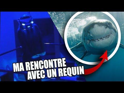 MA RENCONTRE AVEC UN REQUIN - Salle jeu éphémère Lille