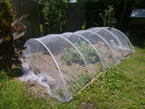 Garden Diary 5 15  Experimenting w Tulle Fabric Row cover to keep out insects bugs