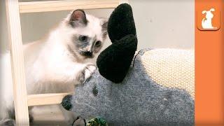 Baby Kittens VS. Giant Mouse! - Kitten Love