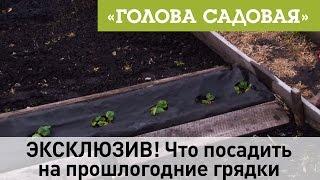 Голова садовая - ЭКСКЛЮЗИВ! Что посадить на прошлогодние грядки