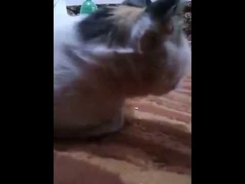 Cat Vomit Due to Black Magic | FunnyCat.TV
