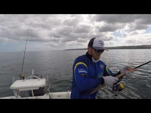 BCF - Moreton Bay Longtail Tuna Sammy Hitzke