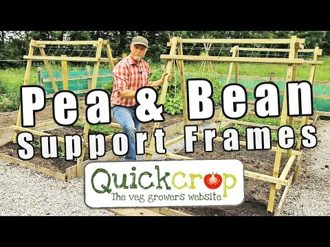 Pea frame ideas