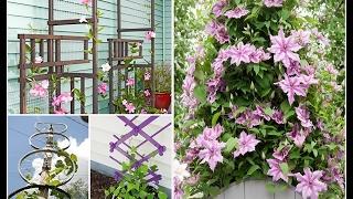 какие типы опор можно использовать для растений на даче