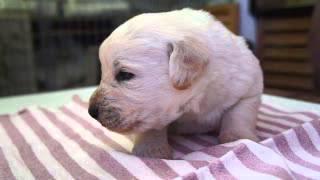 関西ミックス犬ブリーダー子犬販売 http://www.at-breeder.net/mix/kans...
