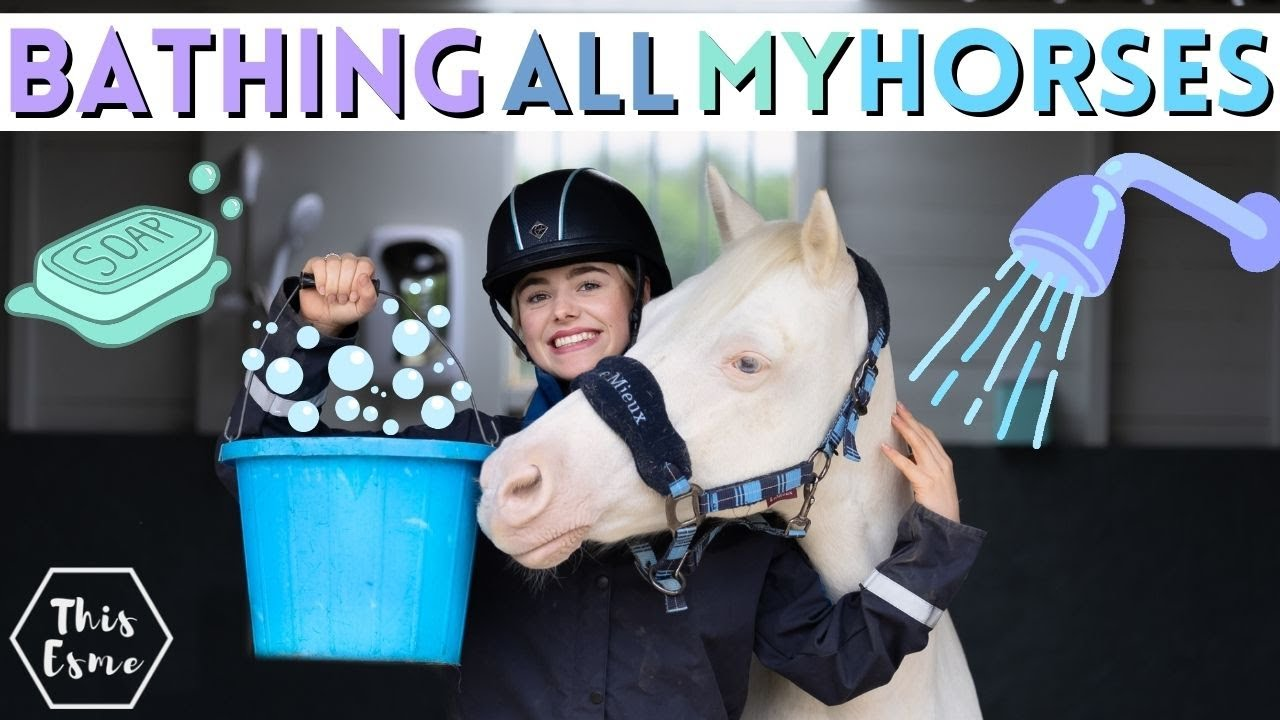 Download Bathing All of My HORSES! Spring Clean AD | This Esme