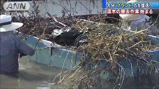 大分の牡蠣「ひがた美人」復活へ 養殖場の流木撤去(17/07/17)