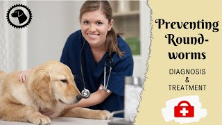 ROUNDWORMS IN DOGS - Detecting And Preventing Roundworms | DOG HEALTH 🐶 Brooklyn's Corner