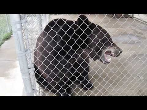 Правда о зоопарках и цирках