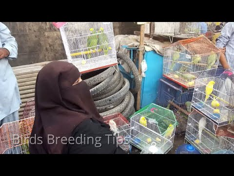 Sunday Lalukhet birds market Karachi Olx market
