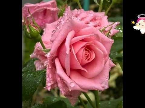 Bộ sưu tập hoa hồng 2016