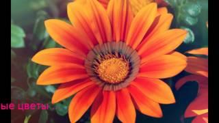 Доставка цветов в Воронеже(http://gollandia-flower.ru/ Официальный сайт Салон флористики