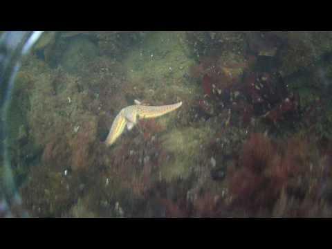 Swimming by WWII wrecks -Orkeny 2016