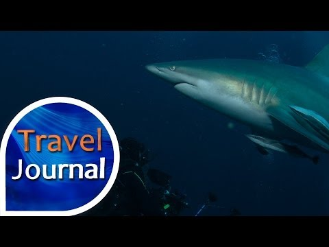Travel Journal (157) - V bájné Aldabře se Stevem Lichtagem
