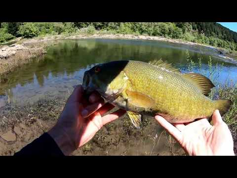 Day 2 Bed Fishing For River Smallmouth On The Umpqua And Some Shad