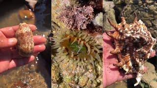 해안에서 위대하고 독하고 기이 한 해산물 잡기 66 회…