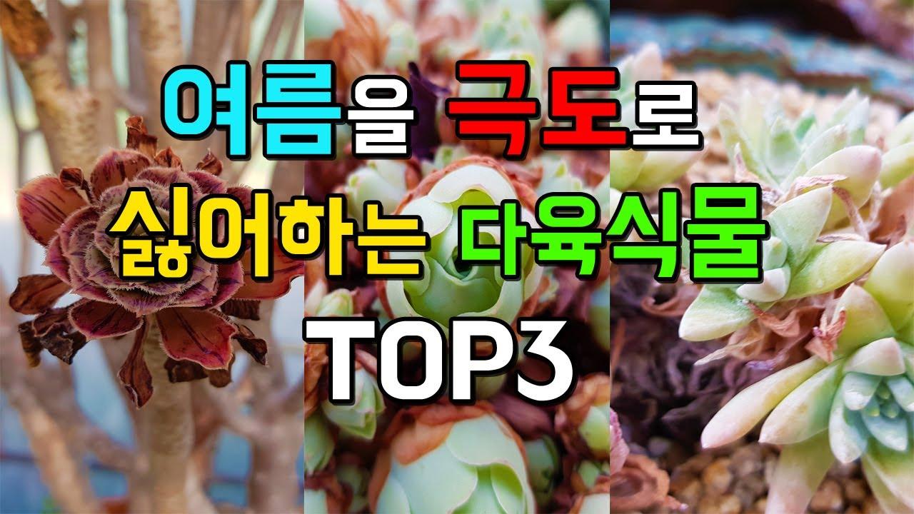 여름에 가장 주의해야할 다육식물 TOP3
