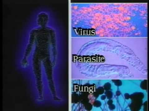"""Interaction Between Mind, Nervous System, and Immune System: Excerpt from """"Immuno-Imagery DVD"""""""