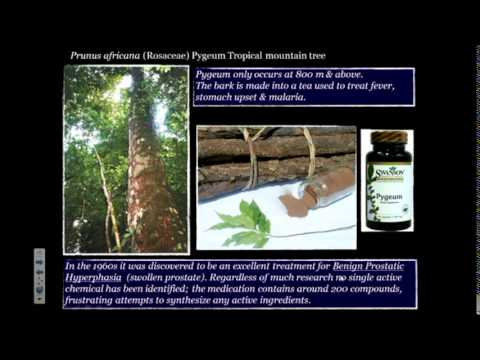 Medicinal and Edible Plants of Cameroon