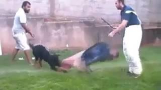 Addestrano un feroce Rottweiler ma stavolta qualcosa va storto!
