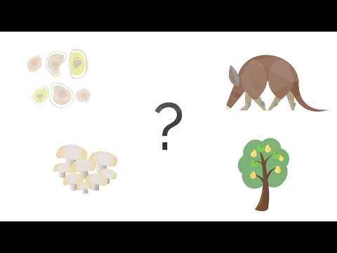 How are organisms classified