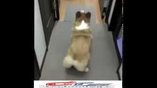 Dog stye Dance