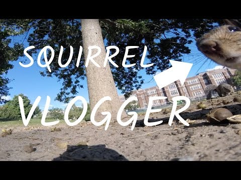 A squirrel stole a GoPro, took it up a tree, and you can watch it all POV