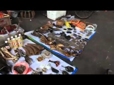 Closing a Deadly Gateway - WWF //wwf.panda.org/tigers - YouTube on aspca panda, giant panda, biggest panda, japan panda, anime panda, animals panda, funny panda, cartoon panda, national wildlife federation panda, red panda, weed panda, huge panda, world wildlife fund panda, baby panda, wtf panda, african panda, enjoi panda, very cute panda, sad panda, bubble panda,