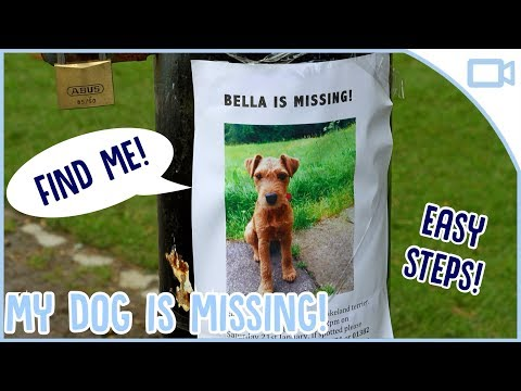 what-to-do-if-your-dog-gets-lost!