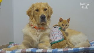 This Dog And Cat Are The Cutest Best Friends In The World! | Kritter Klub