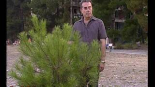 Abkhazia: Paradise in limbo. PART 1 (in English)