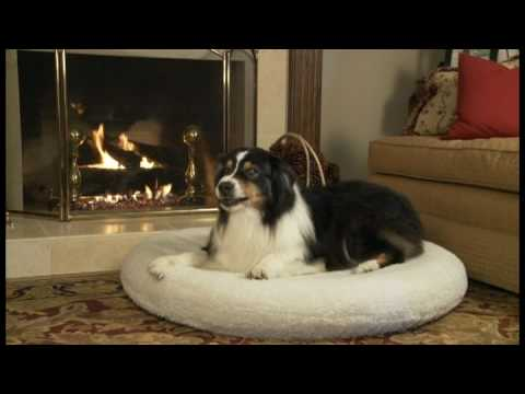 precision-pet-products:-snoozzy-orthoair-product-demo