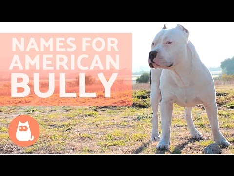 Names For American Bully Dog