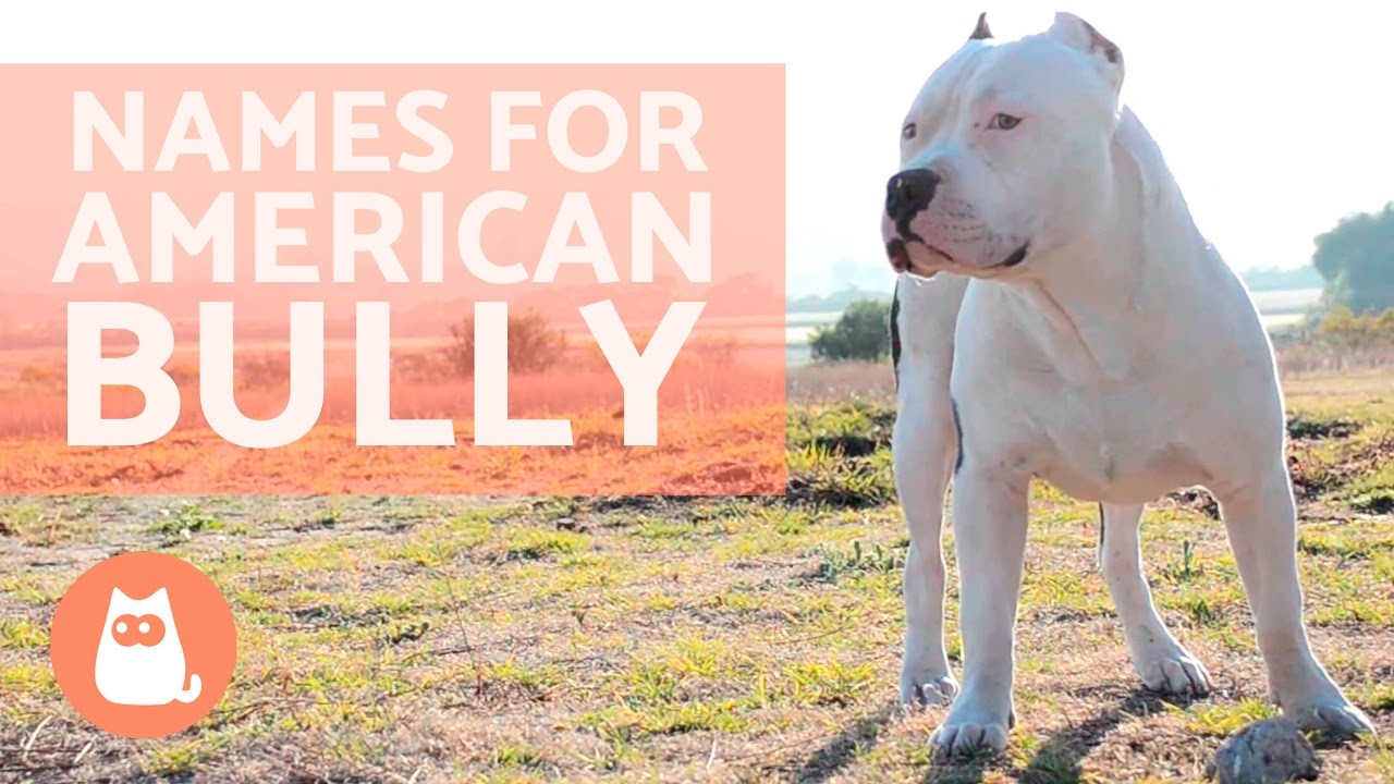 Names For American Bully Dog Youtube