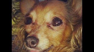 Маленькая собачка Соня обезумела от счастья!