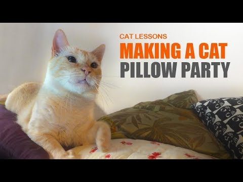 How to Make a Cat Pillow Party