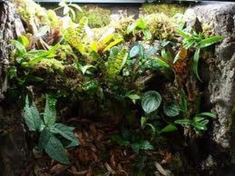 How To: Clean Crested Gecko Terrarium