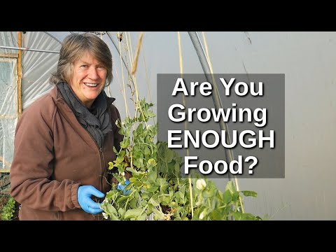 How Much To Grow For Self Sufficiency | Food Security And Resilience (2020)