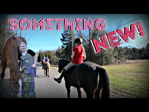 DOING SOMETHING NEW WITH OUR HORSES Day 114 (04/24/18)