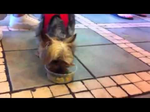 Vegetarian dog at Oasis Grill in San Francisco