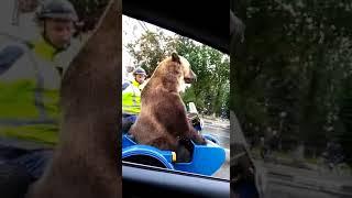 Медведь едет на мотоцикле по улицам города. Прикол.