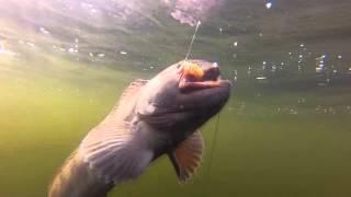 Ловля зубатки на Белом море подводная съёмка(Беломорская зубатка и как её ловить. Видео реальной рыбалки с подводной камеры. Подпишитесь на канал CRAZY..., 2016-03-28T17:54:19.000Z)