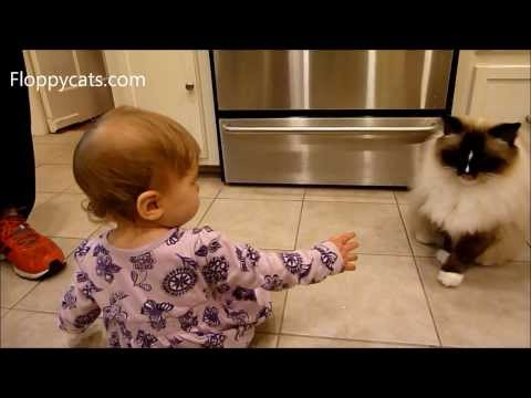Ragdoll Cat and Baby: Ragdoll Cat Charlie Interacts with 1-year old Baby - ねこ - ラグドール - Floppycats