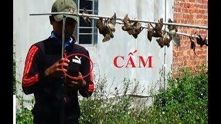 Dùng Tiếng Sẻ Mới 2018 Test Đàn Chim Cáo- Tuyên Đen lại Phải Gỡ Chim