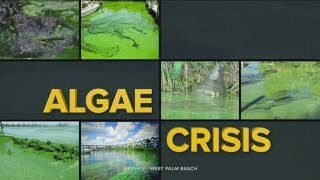 South Florida Algae Crisis Special Report