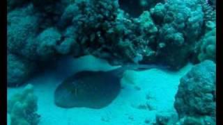 www.divebase.at - Red Sea - Hamata 2009 - 1/3