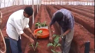 GREENHOUSE CULTIVATION IN INDIA