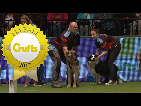 Flyball - Team Semi Finals (Part 1) | Crufts 2017
